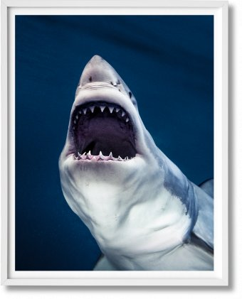 Michael Muller. Sharks, Art Edition No. 1–100 'Tear You Apart' (Limited Edition)
