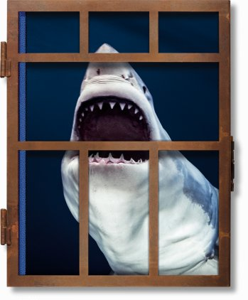 Michael Muller. Sharks (Limited Edition)