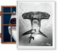 Michael Muller. Sharks, Art Edition No. 101–200, 'Under Study' (Limited Edition)