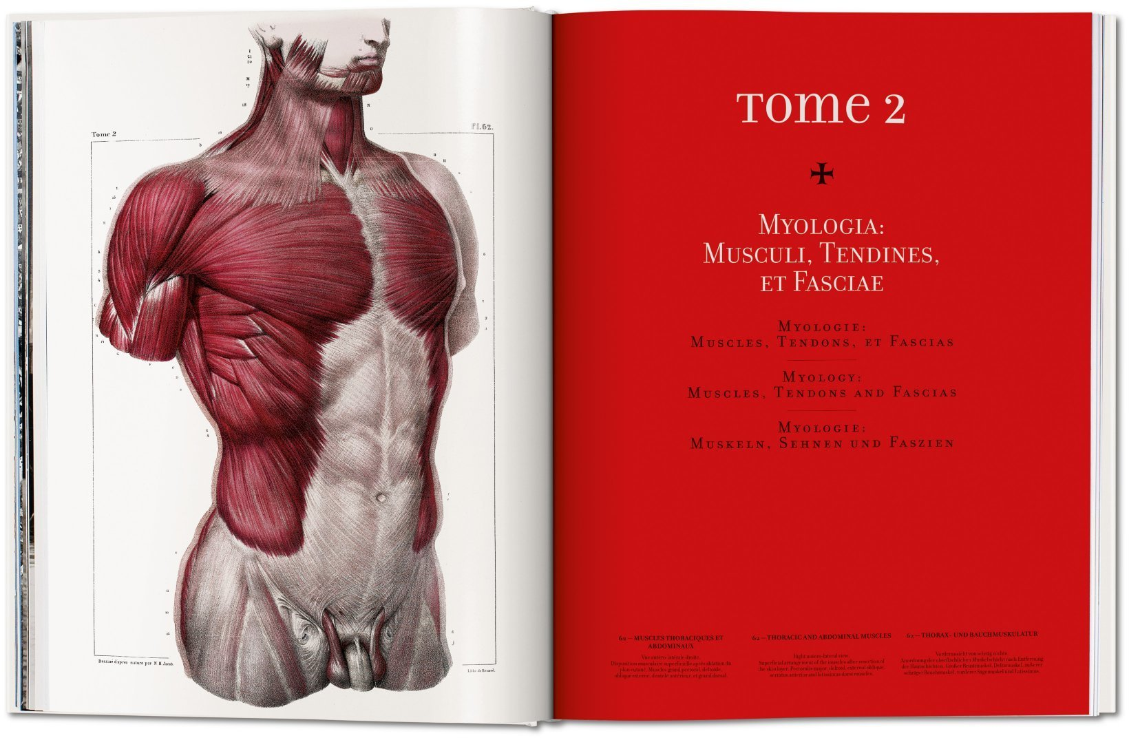 Bourgery Atlas Of Human Anatomy And Surgery Taschen Books