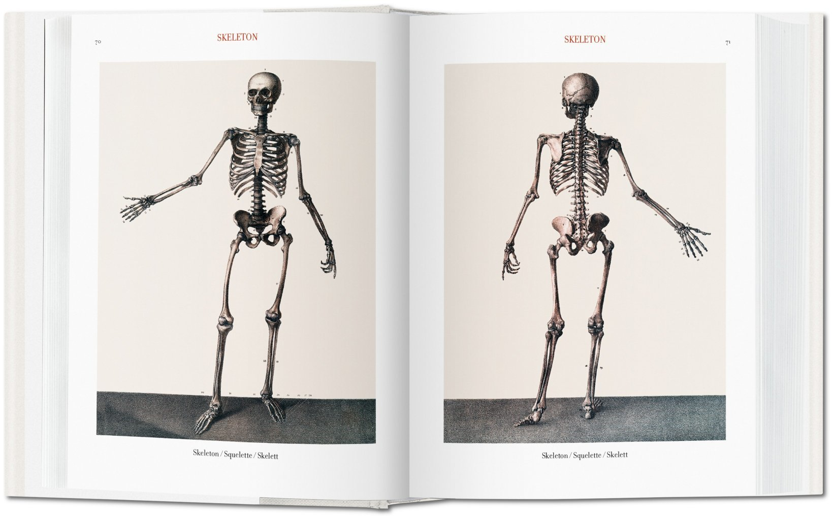 Jean Marc Bourgery Atlas Of Human Anatomy And Surgery Bibliotheca