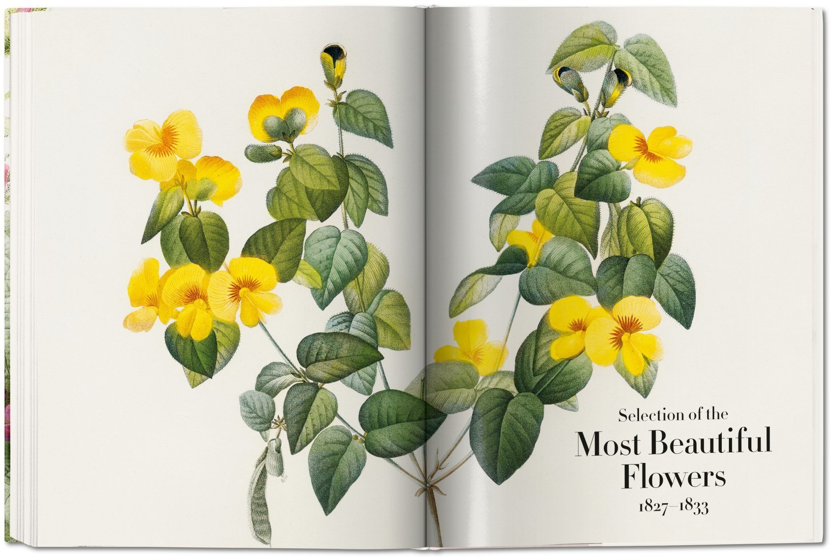 Pierre joseph redout the book of flowers taschen books the book of flowers image 7 izmirmasajfo