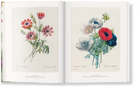 Redouté. The Book of Flowers